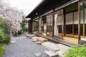 嵐山の湯豆腐屋の庭に咲く桜