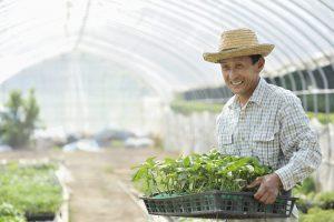 農家の男性が苗を運んでいる