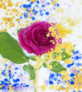 カラーインクとバラ