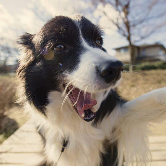 自撮りをする犬のイメージ